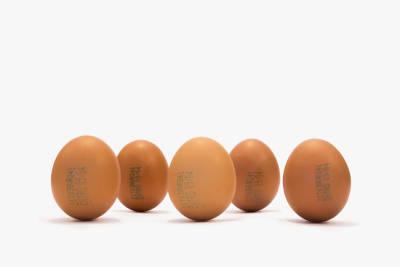 Eier im Schulessen – gesund oder schädlich?